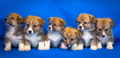 EXTORTION IN THE PET INDUSTRY! BANNING PET SHOPS AND